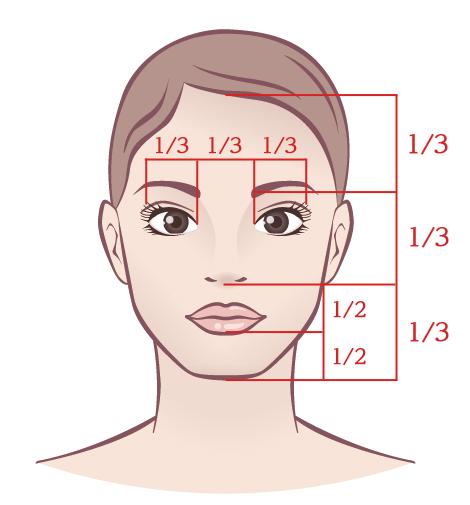 縦の顔黄金比率